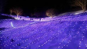 岩手町冬夜のラベンダー畑